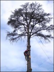 Treebuzz